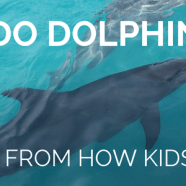 What do dolphins eat? Lessons from how kids search