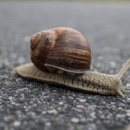 Fix a Slow WordPress Site With These 3 Steps